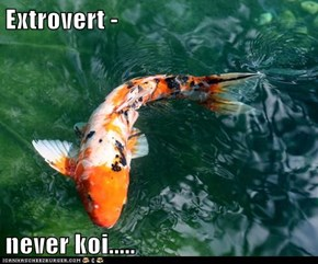 Extrovert -   never koi.....