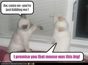 CAT-TALES!