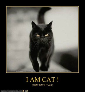 I AM CAT !