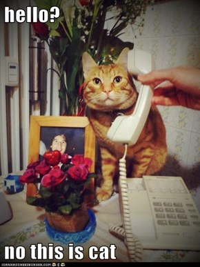 hello?  no this is cat