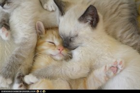 Cyoot Kittehs of teh Day: Cuddle Pile!!!1!