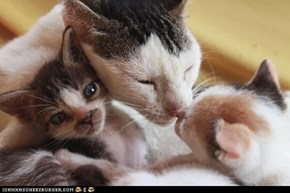 Cyoot Kitteh of teh Day: All Happy Families are Alike...