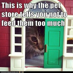 This is why the pet store tells you not to feed them too much