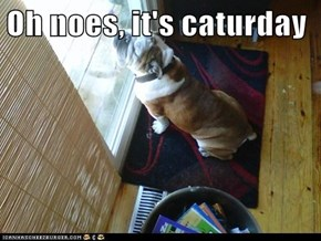 Oh noes, it's caturday