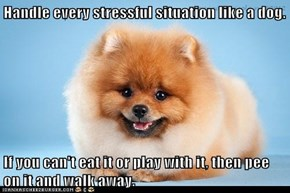 Handle every stressful situation like a dog.  If you can't eat it or play with it, then pee on it and walk away.