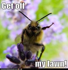 Get off  my lawn!