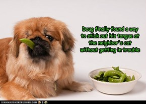 Smart dog Doug Knows how to Use Vegetables