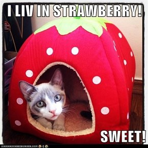I LIV IN STRAWBERRY!  SWEET!