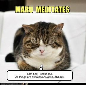 MARU  MEDITATES