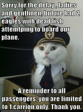 Captain Kitteh: Anything Extra Becomes Property of the Captain