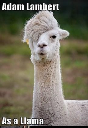 Adam Lambert  As a Llama
