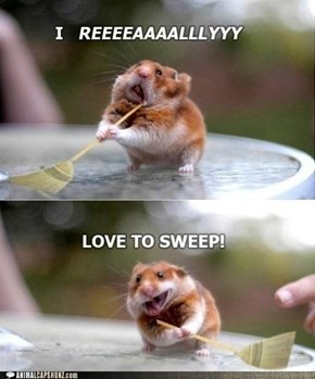 Animal Capshunz: Swept Me Off My Feet
