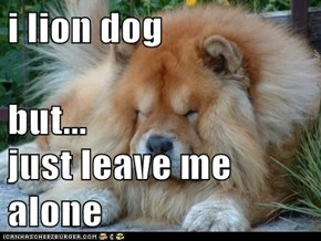 i lion dog but... just leave me alone