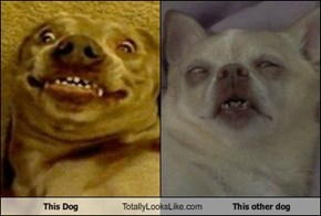 This Dog Totally Looks Like This other dog