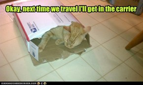 Okay, next time we travel I'll get in the carrier