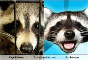 Cage Ratcoon Totally Looks Like LOL Ratcoon