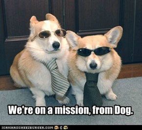 We're on a mission, from Dog.