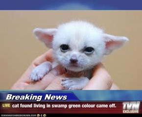 Breaking News - cat found living in swamp green colour came off.