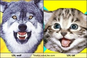 LOL wolf Totally Looks Like LOL cat