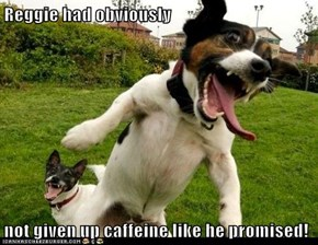 Reggie had obviously  not given up caffeine like he promised!