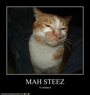 MAH STEEZ