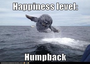 Happiness level:  Humpback