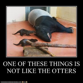 ONE OF THESE THINGS IS NOT LIKE THE OTTERS