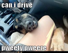 can i drive  pweety pweeze