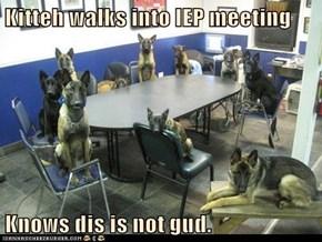 Kitteh walks into IEP meeting  Knows dis is not gud.