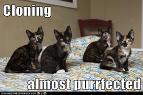 Cloning  almost purrfected