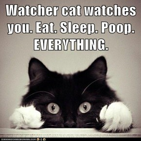 Watcher cat watches you. Eat. Sleep. Poop. EVERYTHING.