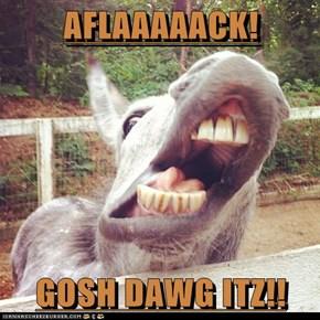 AFLAAAAACK!  GOSH DAWG ITZ!!