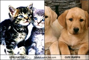 LOVLY KITYS Totally Looks Like CUTE PUPPYS