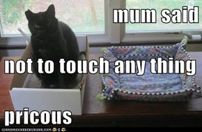 mum said  not to touch any thing  pricous