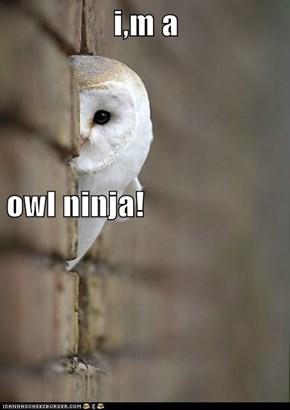 i,m a owl ninja!