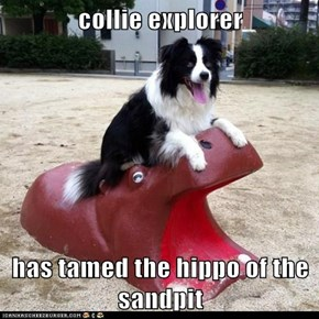 collie explorer  has tamed the hippo of the sandpit