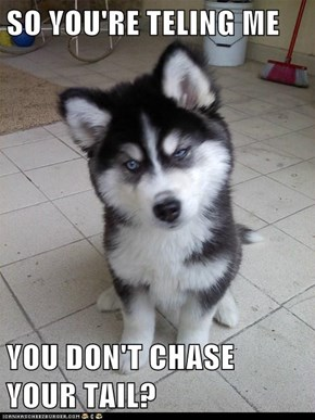 SO YOU'RE TELING ME  YOU DON'T CHASE YOUR TAIL?
