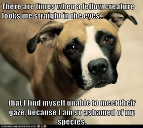 There are times when a fellow creature looks me straight in the eyes...  that I find myself unable to meet their gaze, because I am so ashamed of my species.