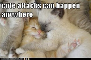 cute attacks can happen anywhere
