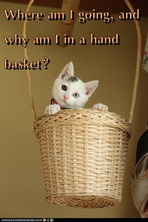 Where am I going, and why am I in a hand basket?