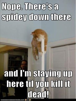 Nope. There's a spidey down there   and I'm staying up here til you kill it dead!