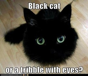 Black cat  or a tribble with eyes?