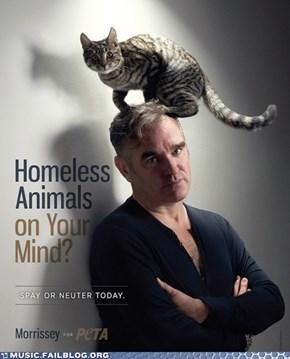 I Can Haz Morrissey?