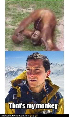 Orangutang actualy
