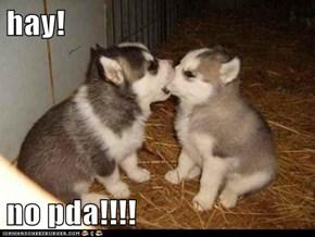 hay!  no pda!!!!