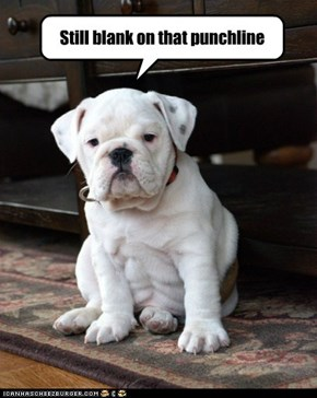 Puppy has a senior moment