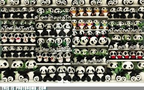 When You See It: Pandas