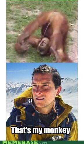 Orangutang actually