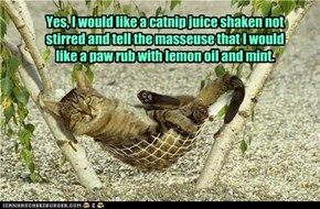 Give the cat a hammock and he's at a tropical resort and you become staff.