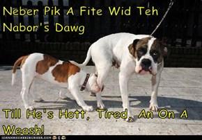 Neber Pik A Fite Wid Teh Nabor's Dawg  Till He's Hott, Tired, An On A Weash!